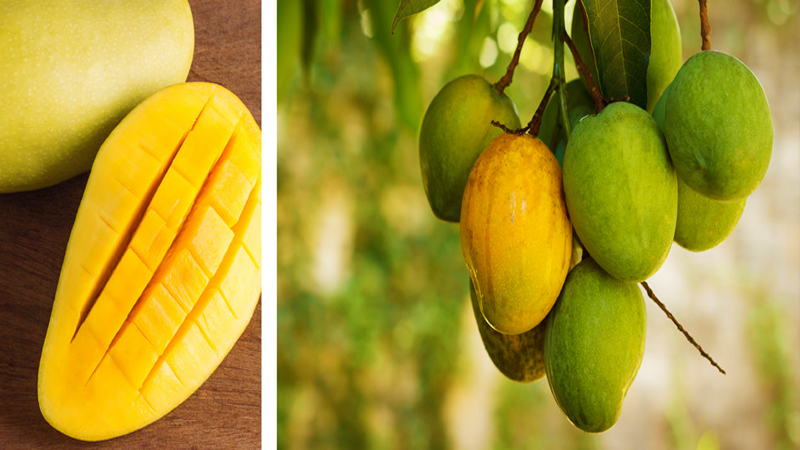 African Mango Fruit Herbal Health Review